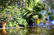 Stedentrip Marrakech. Oase van rust in Marrakech: Jardin Majorelle | Mooistestedentrips.nl