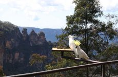 Weekend escape vanuit Sydney: ontdek the Blue Mountains | Mooistestedentrips.nl