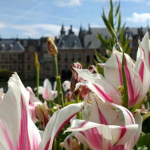 Bezienswaardigheden Den Haag, Uitjes Den Haag, Wat te doen in Den Haag | Mooistestedentrips.nl