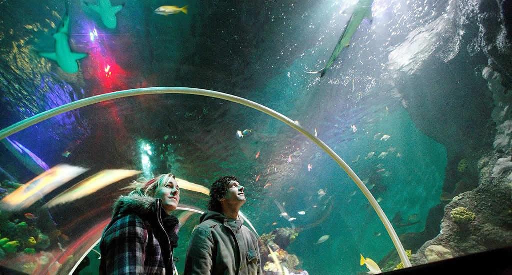 Bezienswaardigheden Scheveningen, Sea Life (foto met dank aan Den Haag Marketing) | Mooistestedentrips.nl
