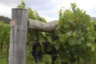 Hunter Valley, wijn proeven in Australie | Mooistestedentrips.nl