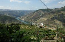 Dagtrip vanuit Porto: Port proeven in de Douro Vallei | Mooistestedentrips.nl