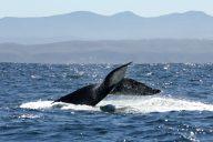 Walvis spotten in Zuid-Afrika, 4x walvis spotten vanuit Kaapstad | Mooistestedentrips.nl