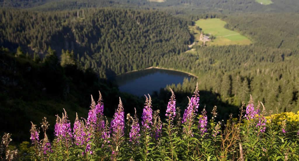 Zwarte Woud: de leukste tips voor het Schwarzwald, Duitsland
