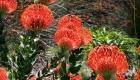 Bezienswaardigheden: Kirstenbosch Gardens | Mooistestedentrips.nl