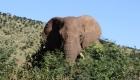 Op safari vanuit Johannesburg: Pilanesberg NP | Mooistestedentrips.nl