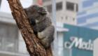 Bezienswaardigheden Sydney: Sydney Wildlife Centre | Mooistestedentrips.nl