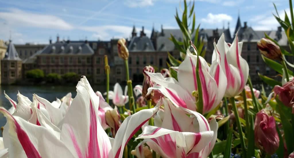 Stedentrip Nederland: Den Haag | Mooistestedentrips.nl
