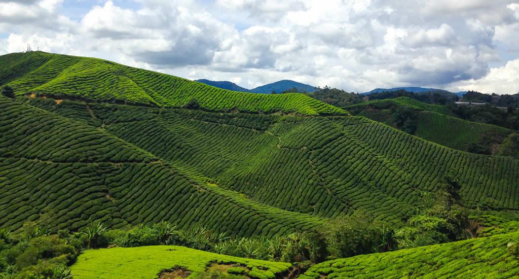 Cameron Highlands Maleisië | Mooistestedentrips.nl
