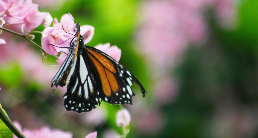 Bezienswaardigheden Kuala Lumpur, KL Butterfly Park | Mooistestedentrips.nl