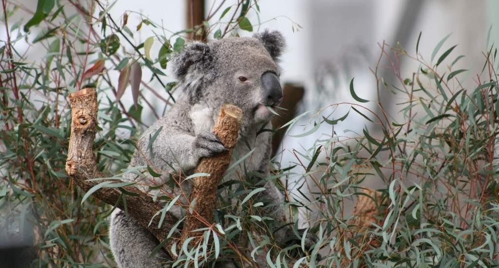 Australië | Bekijk de mooiste steden in Australië